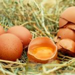 Kurze jaja w pigułce